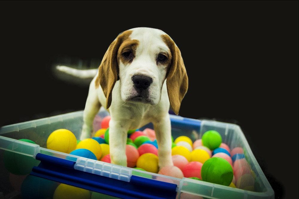 Puppy Club Private