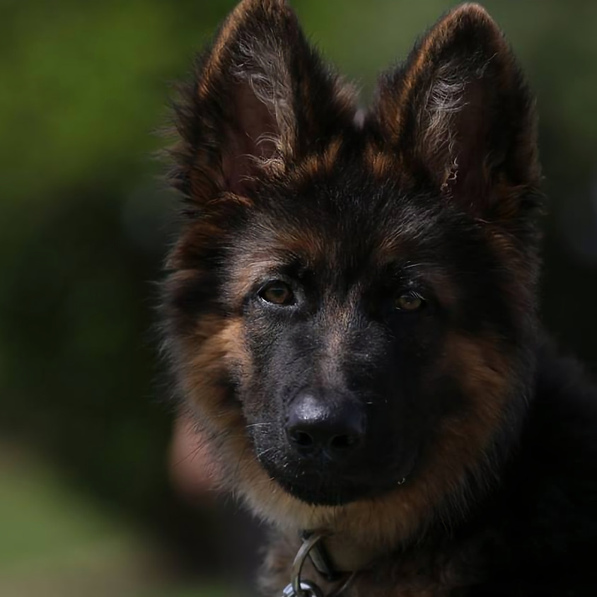 Life Skills 4 Dogs 1