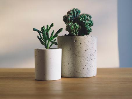 5 plantes d'intérieur faciles d'entretien