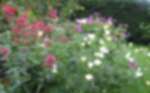 massif à l'anglaise massif fleuri