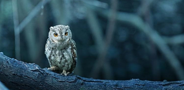 Owl perched on a branch