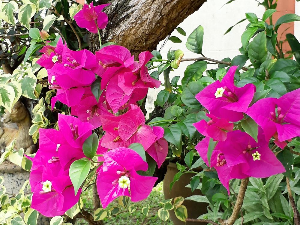e-Caroline | Mum's Garden