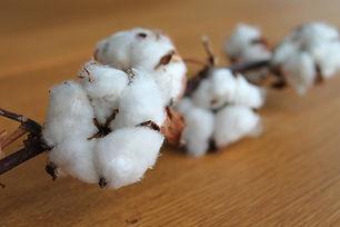 cotton-branch-1271038_1920.jpg