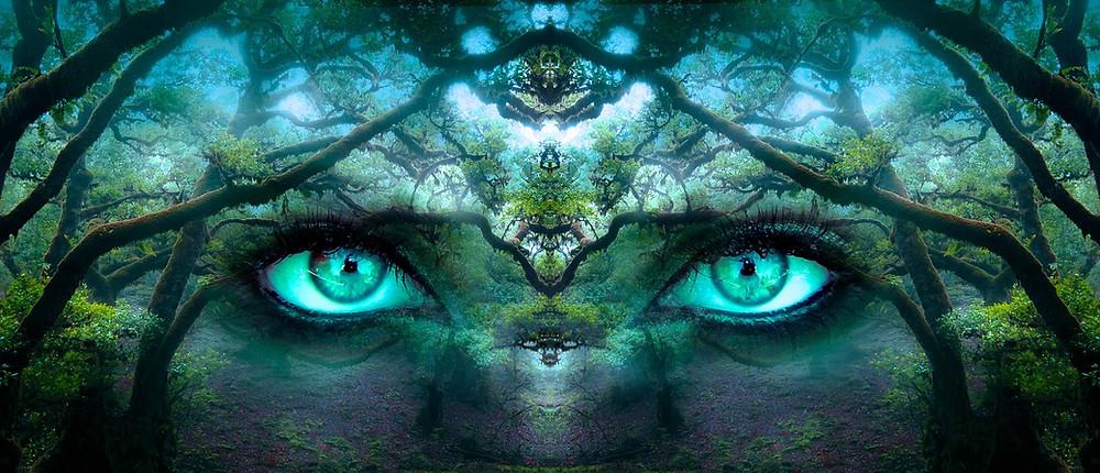 Eyes in woods