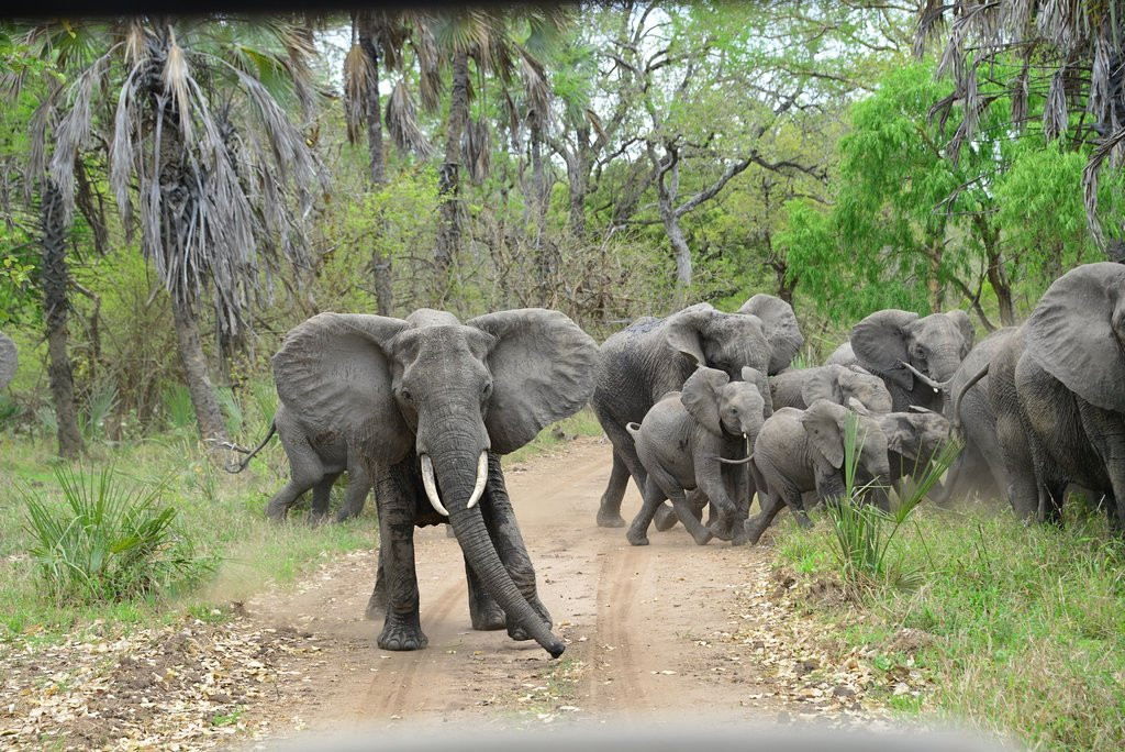 elefantes-del-parque.jpg