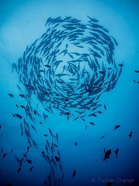 scuba diving ponta do ouro tofo beach mozambique