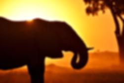 kruger national park south africa safari