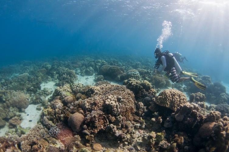 reef exploration.jpg