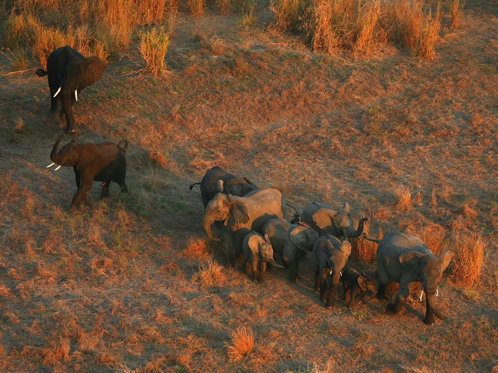 elefantes-no-parque.jpg