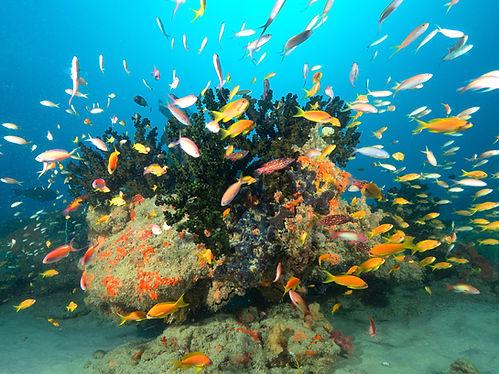 fish, coral reef, bazaruto archipelago, vilanculos, mozambique, scuba diving tour, scuba diving holiday