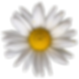 daisy_png_by_bunny_with_camera_dcamhr9-p