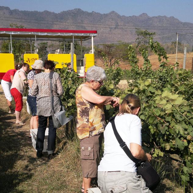 PB Valley winery farmley_05