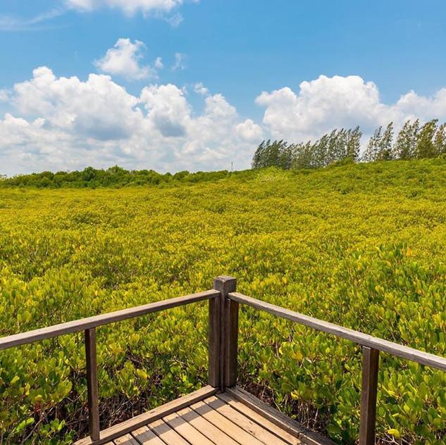 The Golden Meadow