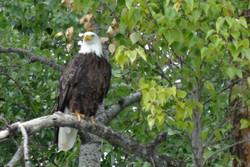 Creston Wildlife Area