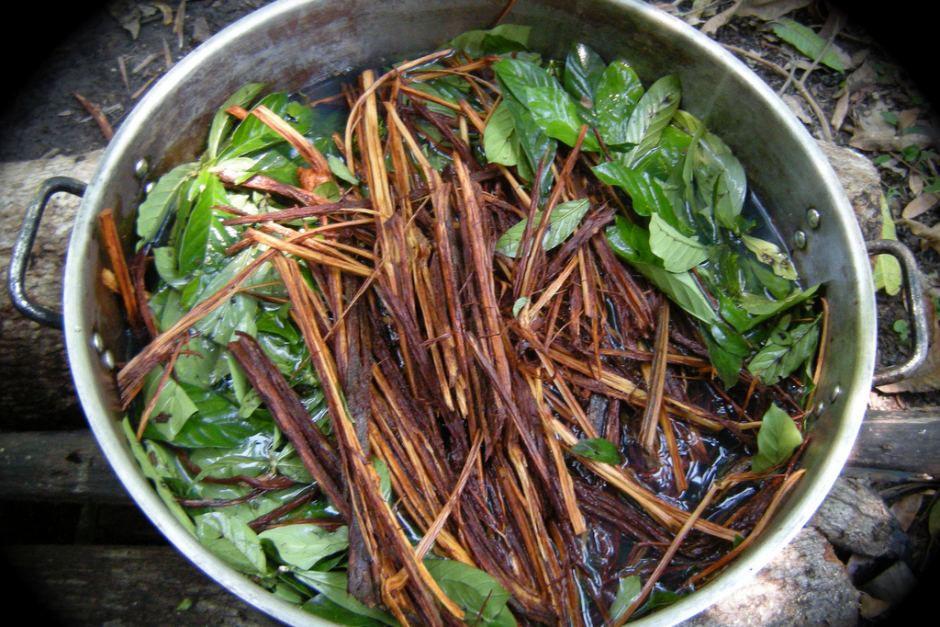 dieta ayahuasca que comer