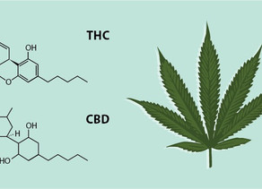 Cannabinoids and Cancer
