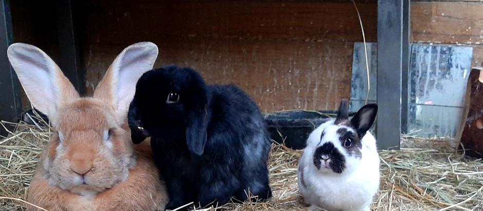 Meet Our Bunnies