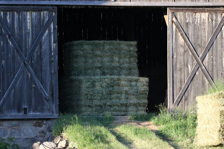 Hay, Forage and Biomass