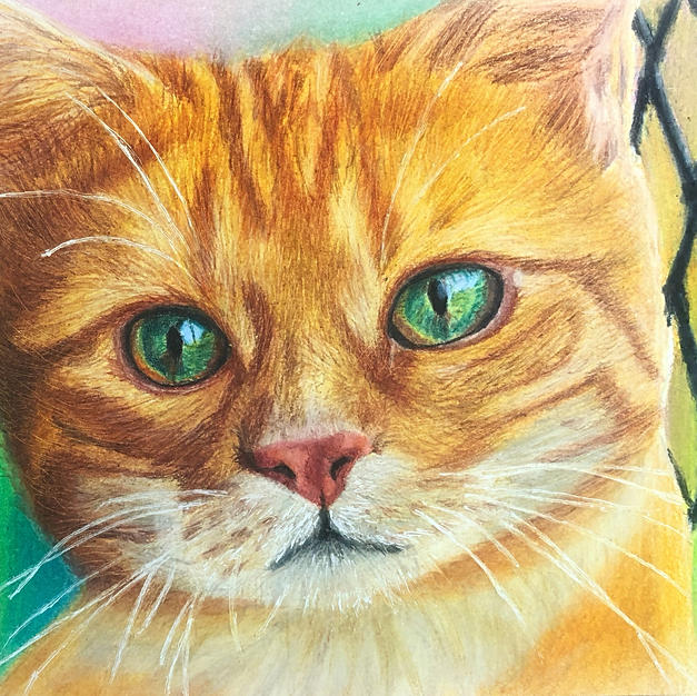 Realistic Cat Portrait By Using Colored Pencils