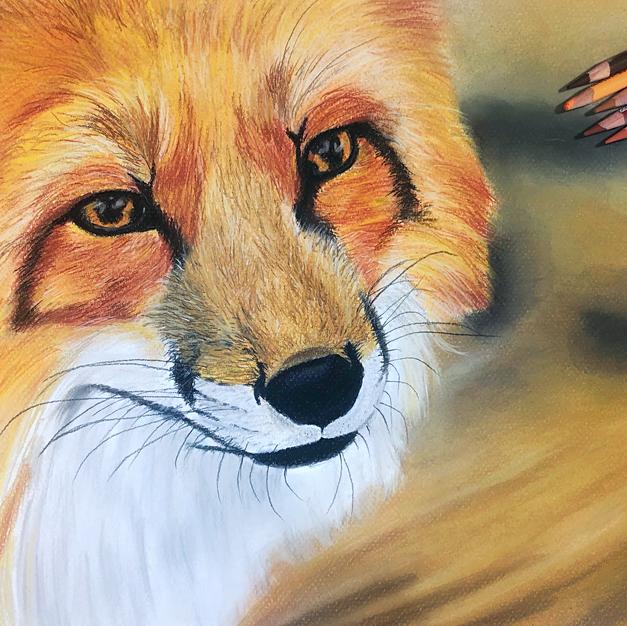 Fox Portrait with Pastel Pencils