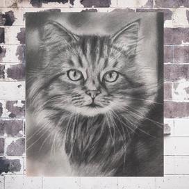 Kurşunkalemle Gerçekçi Kedi Portresi