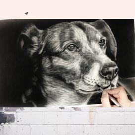 Kömür Kalemle Gerçekçi Köpek Çizimi