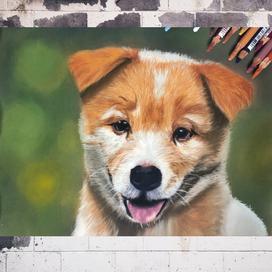 Toz Pastellerle Gerçekçi Köpek Portresi