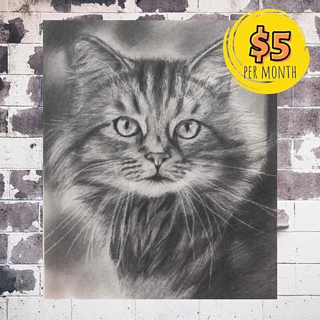 Cat Portrait with Graphite