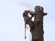Tree-removal.jpeg