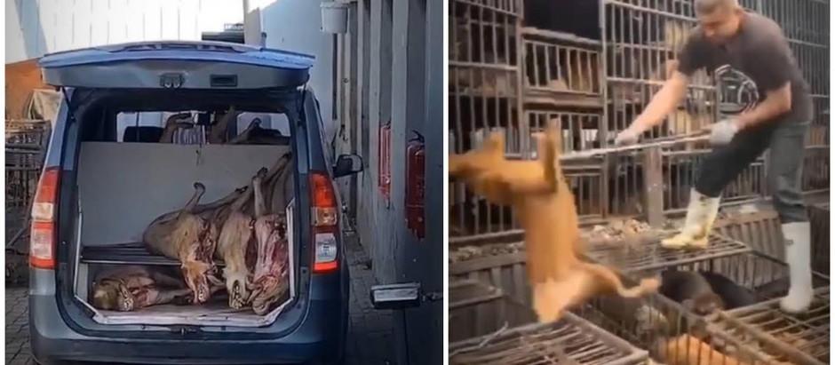 INSIDE CHINA'S NEFARIOUS DOG MEAT TRADE
