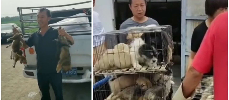 CHINESE DOG BREEDERS, OUT OF CONTROL!