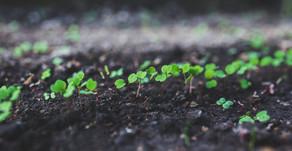 Non-Hybrid Seeds and Hybrid Seeds