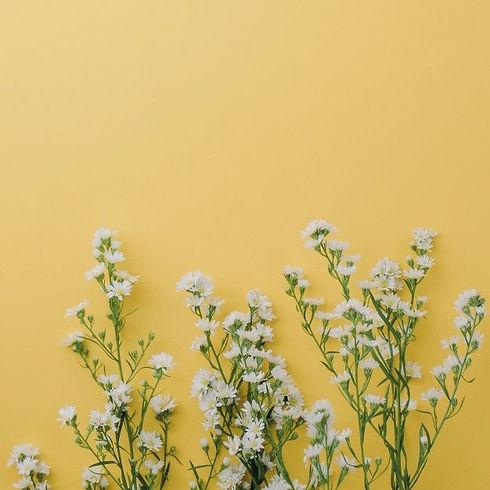 cute-little-white-cutter-flowers-yellow-