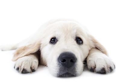 Reizen met huisdieren Dierenkliniek Goes Dierenarts Wemeldinge