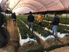 Evaluacion de Cultivo con Productor