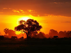 african-sunset-pictures.jpg