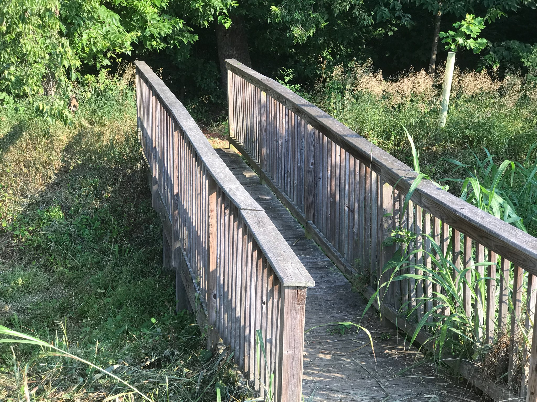 Nature Trail .JPG