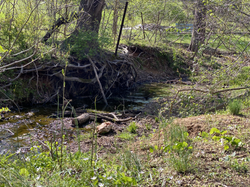 Creek on Nature Trail