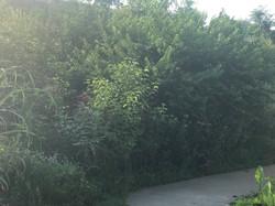Entrance Path.JPG