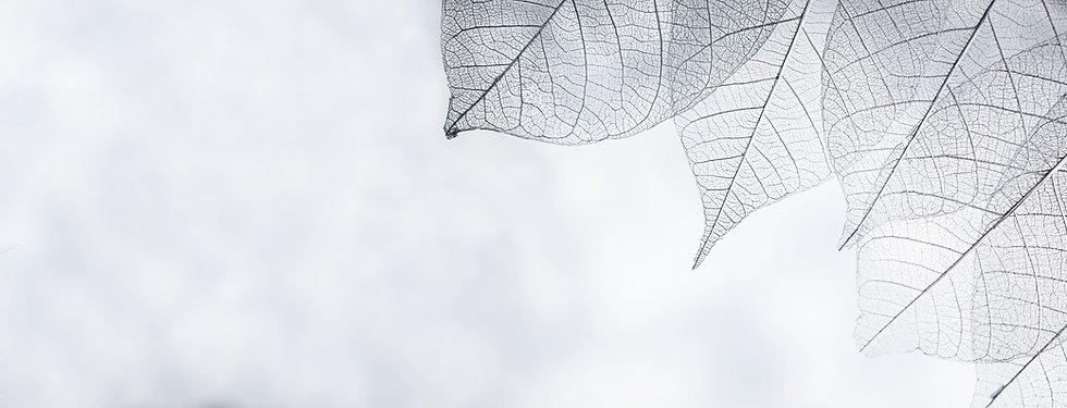 skeleton-leaves-on-blured-background-close-up (2)_edited.jpg