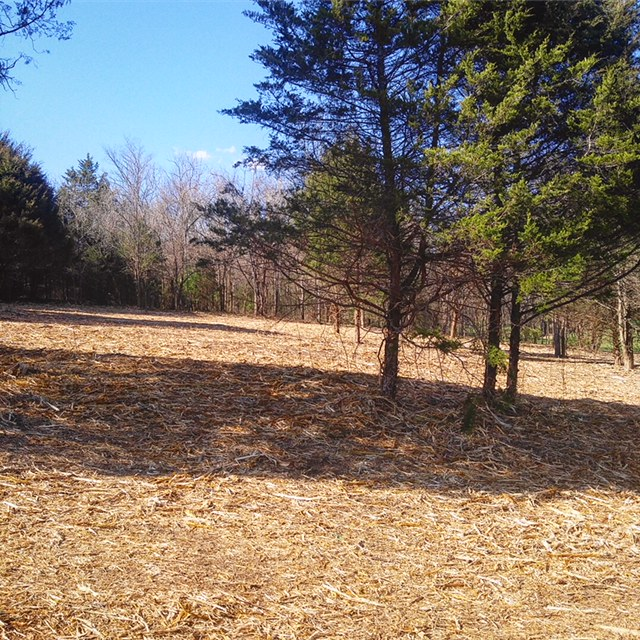 Tennessee Land Clearing