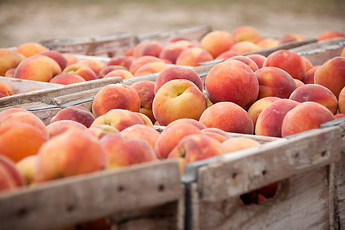 Box of Okanagan Peaches