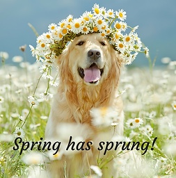 Spring Pet Health Tips - Algester Vet