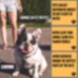 Algester Vet Summer Safety Tips for Pets