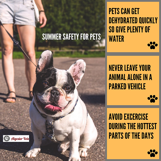 Algester Vet Summer Safety Tips for Pets
