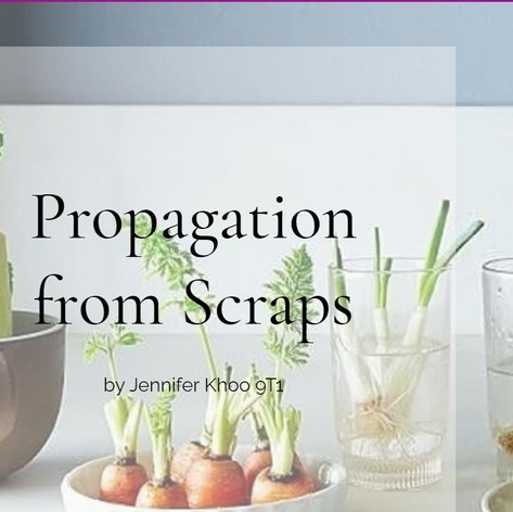 Propagation from Scraps