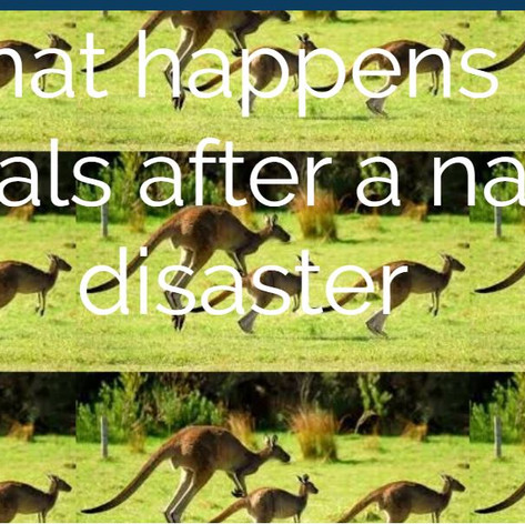 What happens to animals after Natural Disasters.