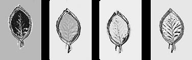 eigen-leaves