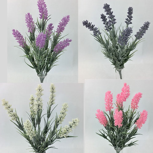 7 Heads Lavender Flower Bush