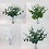 Thumbnail: Eucalyptus Bush/16 stems per bunch/48 cm(L)